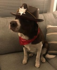 Dog with Sheriff Hat