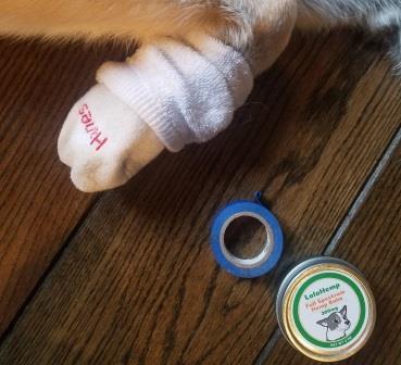LolaHemp CBD Balm on Dog's Paw