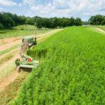 Hemp Farming 2020