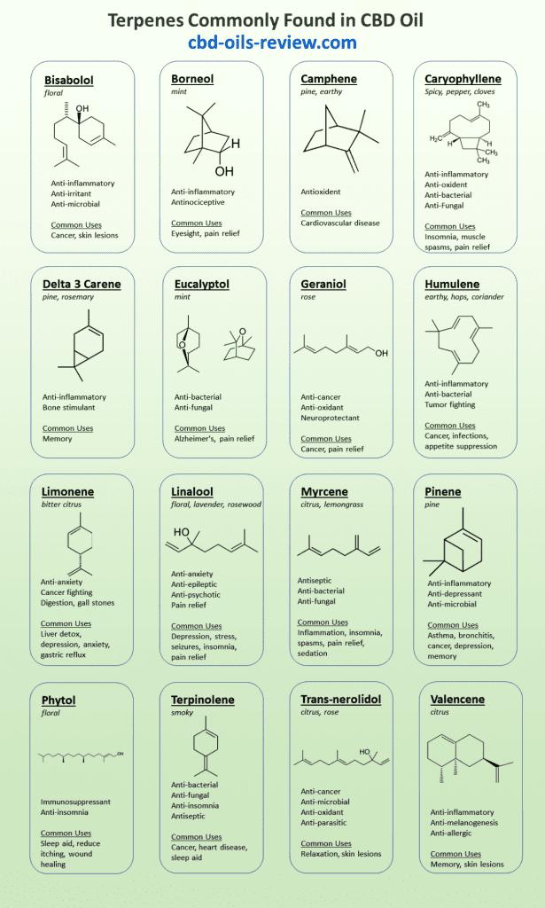 Terpenes in CBD Infographic