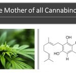 CBG: another cannabinoid you should become familiar with