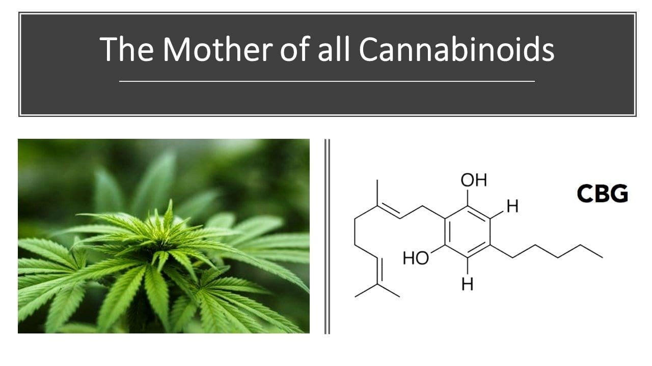 CBG - the Mother of all Cannabinoids