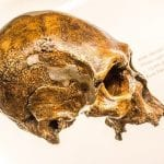 Neanderthals may have had less threshold for pain