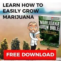 Grow Bible